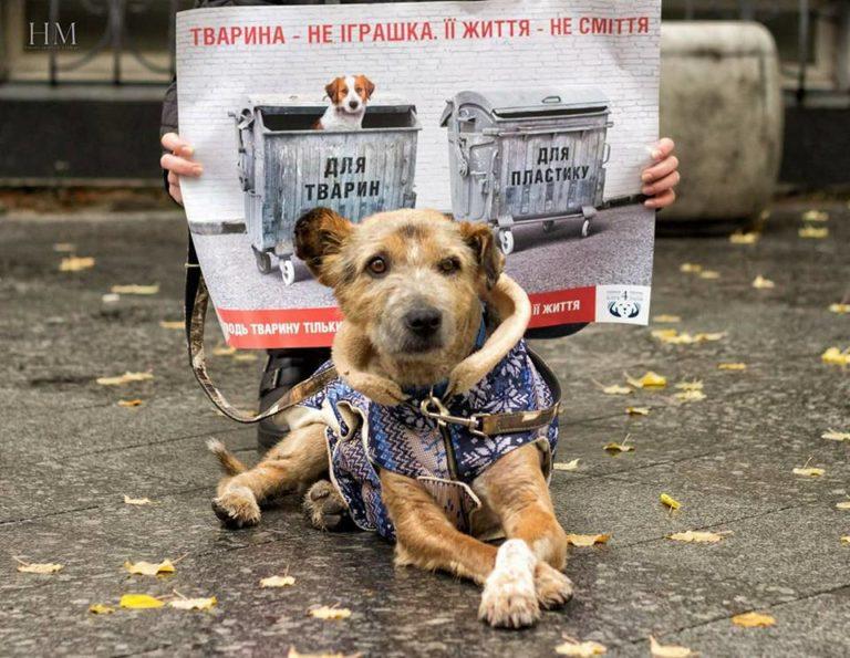 """КП """"Центр захисту тварин"""" надає  ветеринарні послуги для домашніх улюбленців"""